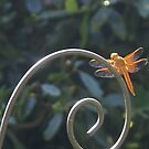 Happy Dragon Fly - Orange Dragon Fly by leih2008