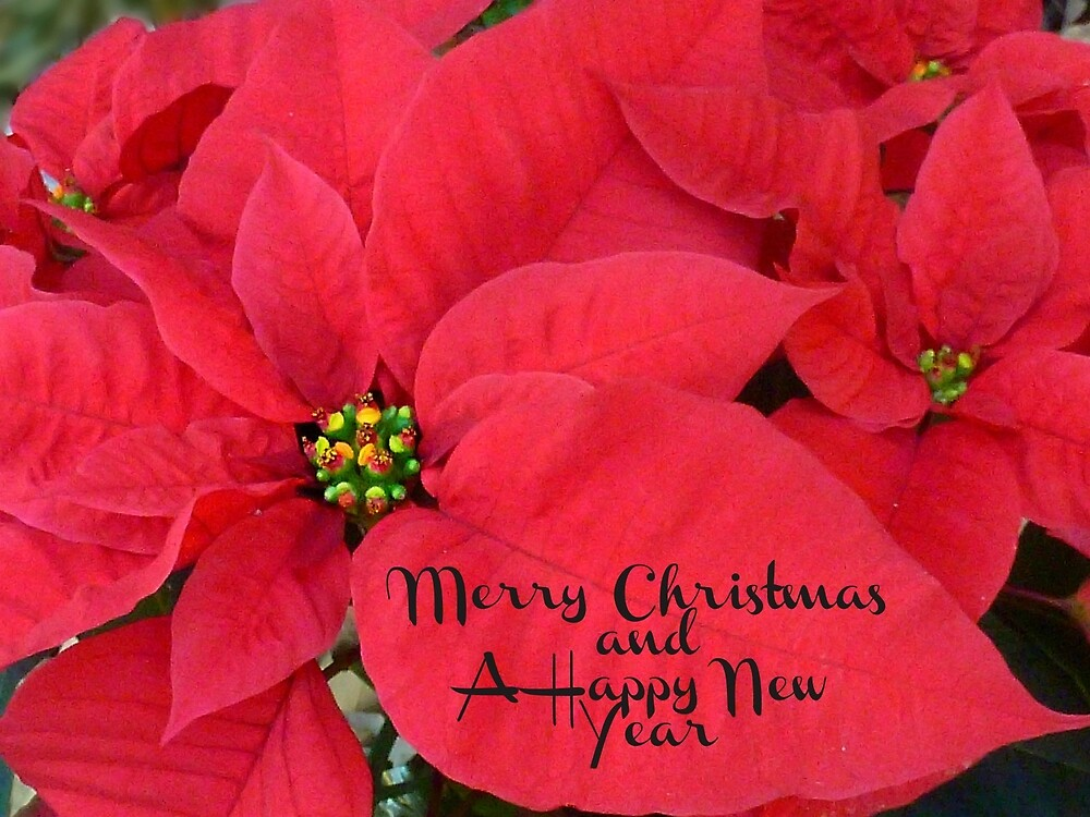 Merry Christmas and Happy New Year - Christmas Poinsettia by William Tanneberger