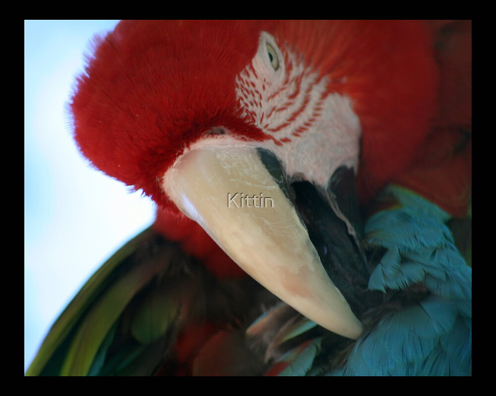 parrot 03 by Kittin