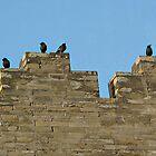 Wall Birds  by Ethna Gillespie