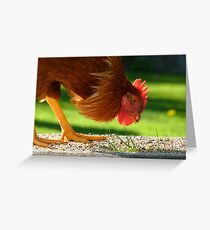 Ferdinand The Bull! - Rooster - Southland NZ Greeting Card