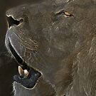 Quiet Roar by collin