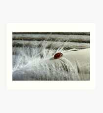 The Lady And The Feather - Ladybird Art Print