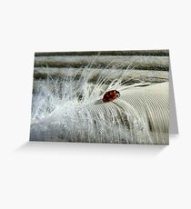 The Lady And The Feather - Ladybird Greeting Card