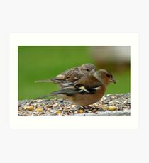 You Make It Look So Easy! - Chaffinch & Sparrow - NZ Art Print