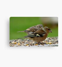 You Make It Look So Easy! - Chaffinch & Sparrow - NZ Canvas Print