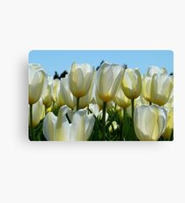 Heaven On Earth! - White Tulips - Rural New Zealand Canvas Print