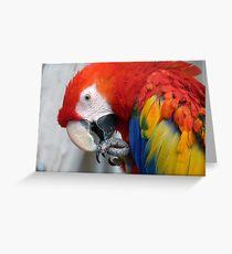 Scarlett O'Hara! - Scarlet Macaw - NZ Greeting Card