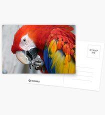 Scarlett O'Hara! - Scarlet Macaw - NZ Postcards