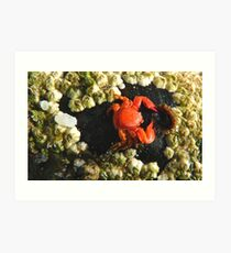 Aww!! My Dinner Plate Is Empty!! - Tiny Crab - NZ Art Print