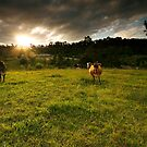 Farm Sunset by Daniel  Speranza