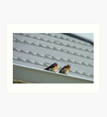 Welcome Home Honey! - Swallows - Dunedin NZ Art Print