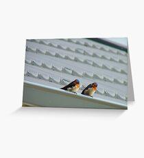Welcome Home Honey! - Swallows - Dunedin NZ Greeting Card