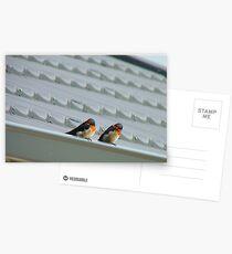 Welcome Home Honey! - Swallows - Dunedin NZ Postcards