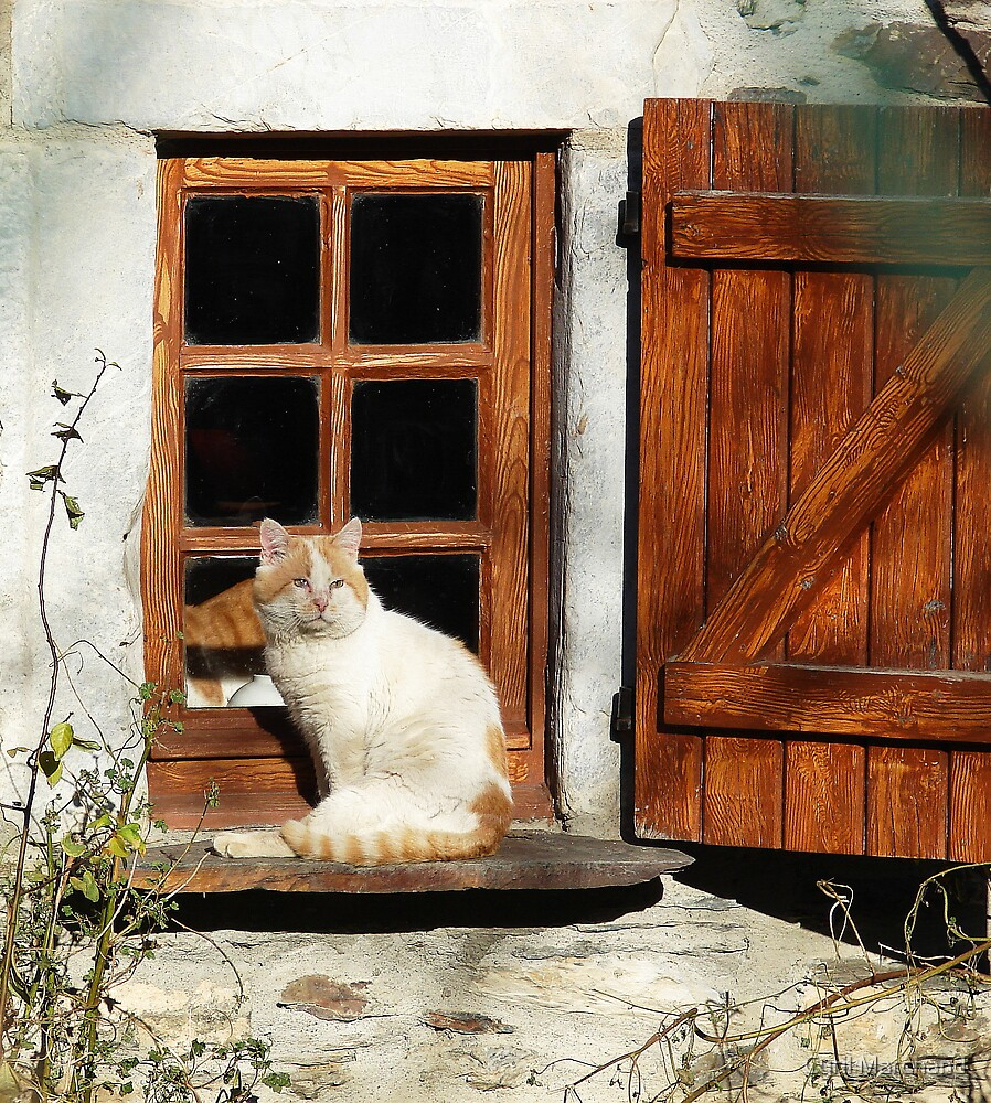 guarding the window by Cyril Marchand