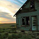 Bird House by Barrie Daniels