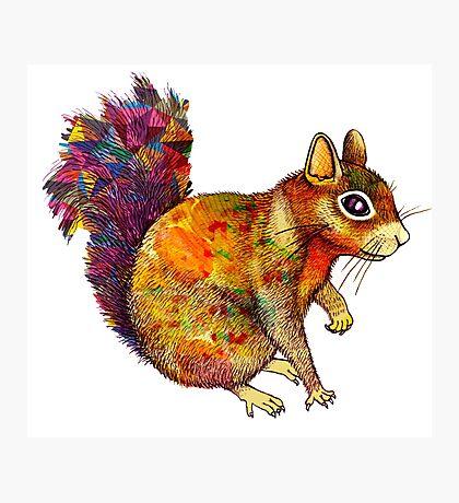 Squirrel Art Photographic Print