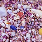 Shells by Travis Easton