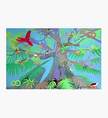 Eight Branches Over Ocho Rios Photographic Print