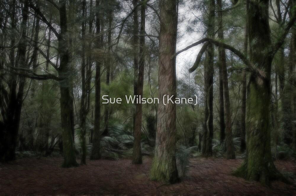 Forest edge by Sue Wilson (Kane)