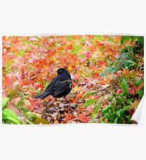 Autumn Rush! - Blackbird - Southland NZ Poster