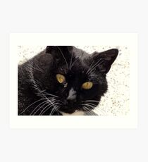 I Double Dare you!!! - Cat - Southland NZ Art Print