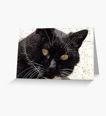I Double Dare you!!! - Cat - Southland NZ Greeting Card