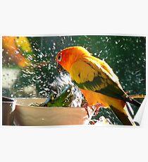 Please Bubbles!!, Let Me Have A Turn...! Sunconure - NZ Poster