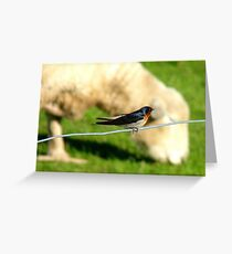Hey Sir!!..You Eat Allot Of Grass!!! - Welcome Swallow - NZ Greeting Card