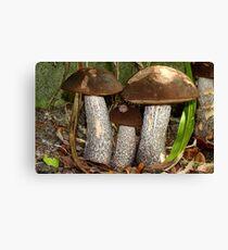 Make Room Please...! - Wild Mushrooms - NZ Canvas Print