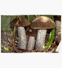 Make Room Please...! - Wild Mushrooms - NZ Poster