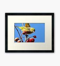 Berry, Berry Delicious - Silver-Eye - Gore Southland Framed Print