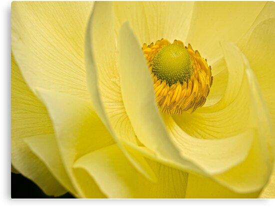 Mellow yellow by Celeste Mookherjee