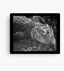 reptile 01 Canvas Print