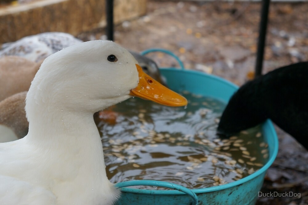 Ducks Love to Eat! by DuckDuckDog