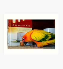 Mmm...Friendly Thoughts And Simple Truths - Sun Conure - NZ Art Print