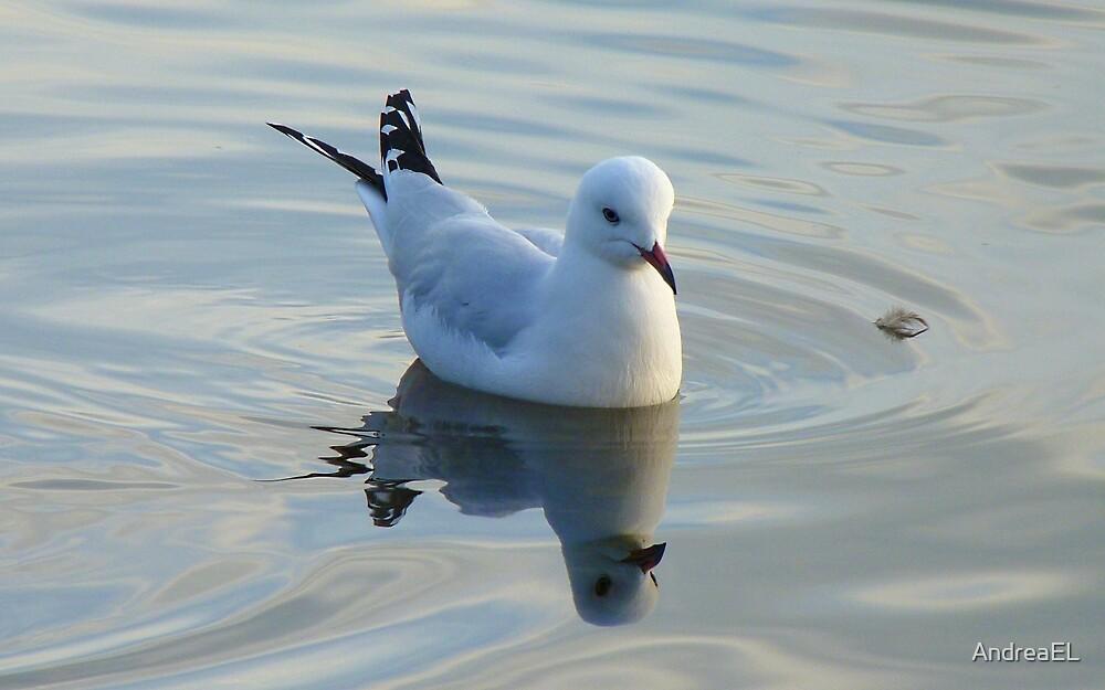 Where I Go... He Follows! - Seagull - Waihola - New Zealand by AndreaEL