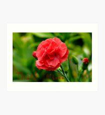 Thank you! - Red Carnation - Southland NZ Art Print