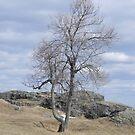 Lone Tree by Martha Medford