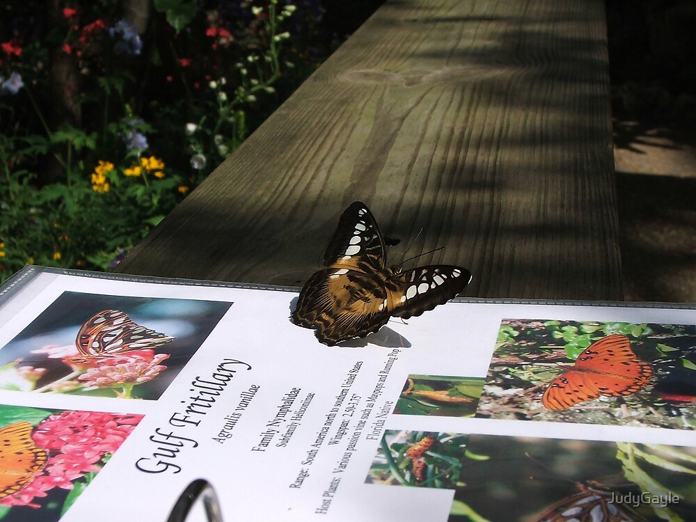 Are You Reading About Me.. by Judy Gayle Waller