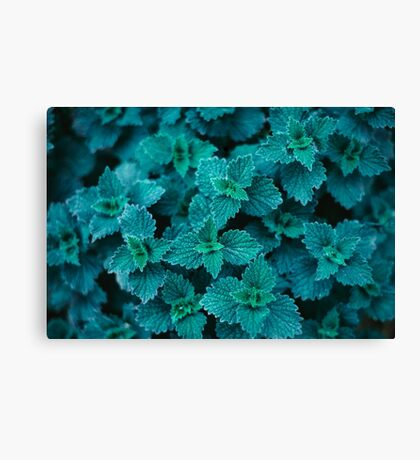 Cold Green Canvas Print