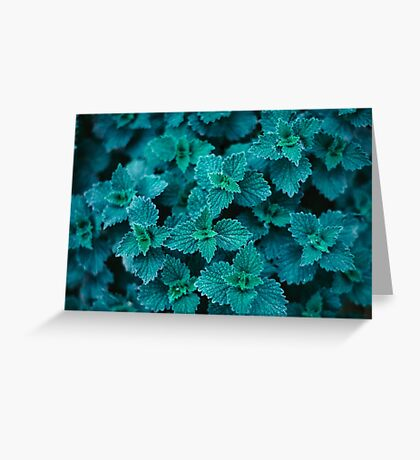 Cold Green Greeting Card