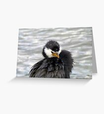 I Have An Attitude, Beware! - Pied Cormorant/Shag - NZ Greeting Card