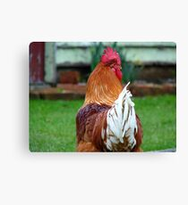 Do You Remember Me?... Rooster - NZ Canvas Print