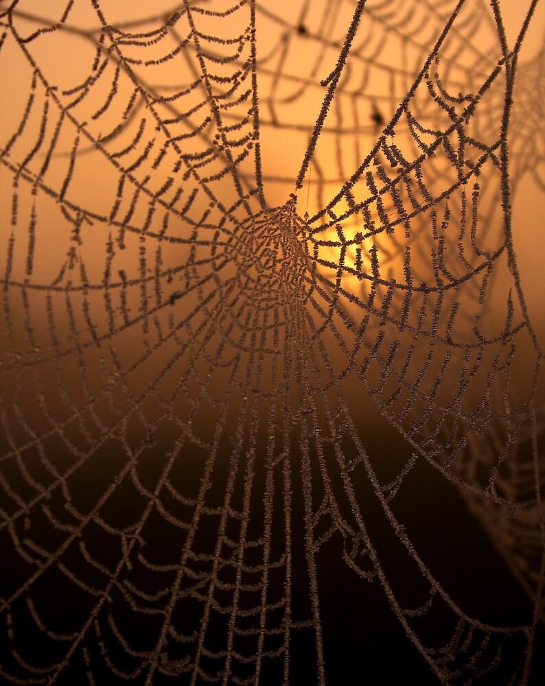 Sunrise Web by torimages