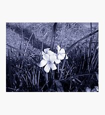 Among Weeds Photographic Print