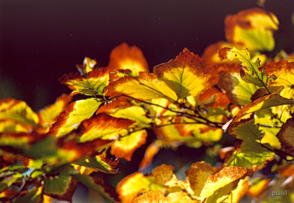 Golden Leaves by pwall