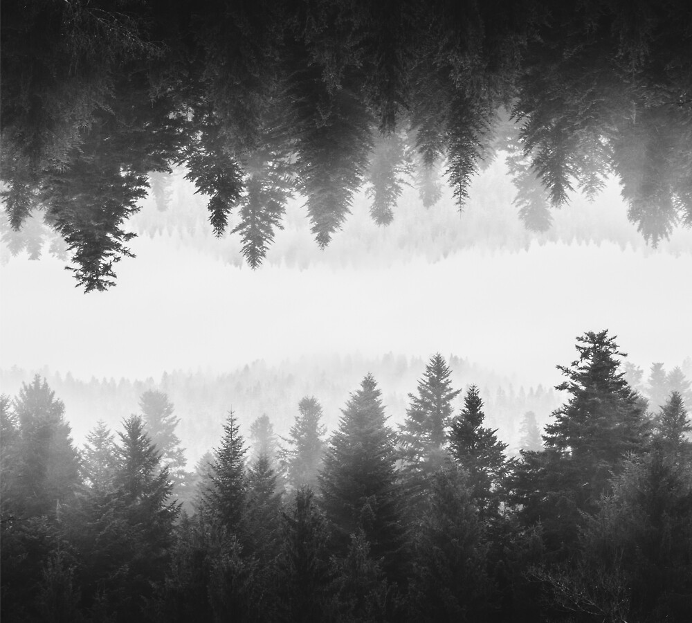 Black and white foggy mirrored forest by Patrik Lovrin