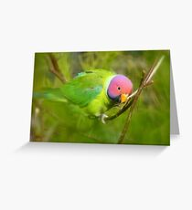 Did You Know I'm A Plum Head?!! - Plum-Headed Parakeet -NZ Dunedin Greeting Card