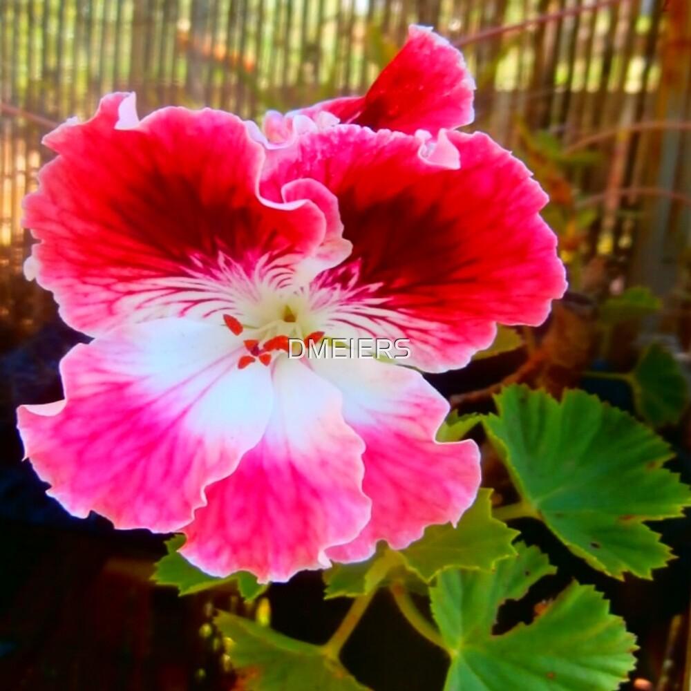 gardening geranium by DMEIERS